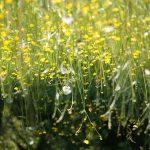 Pollen and Eczema Presentation