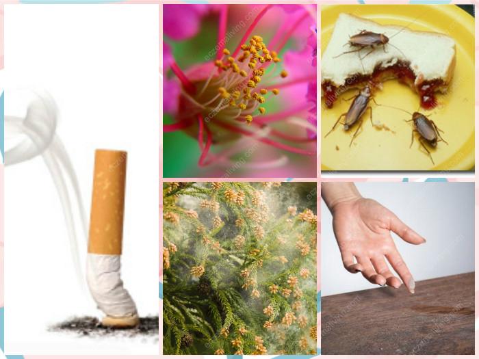 Top Environment Allergens
