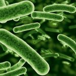 Probiotics study on Food Allergies