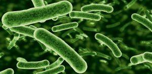 Probiotics study on Food Allergies