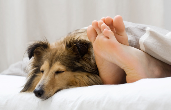 How to manage and treat pet allergy