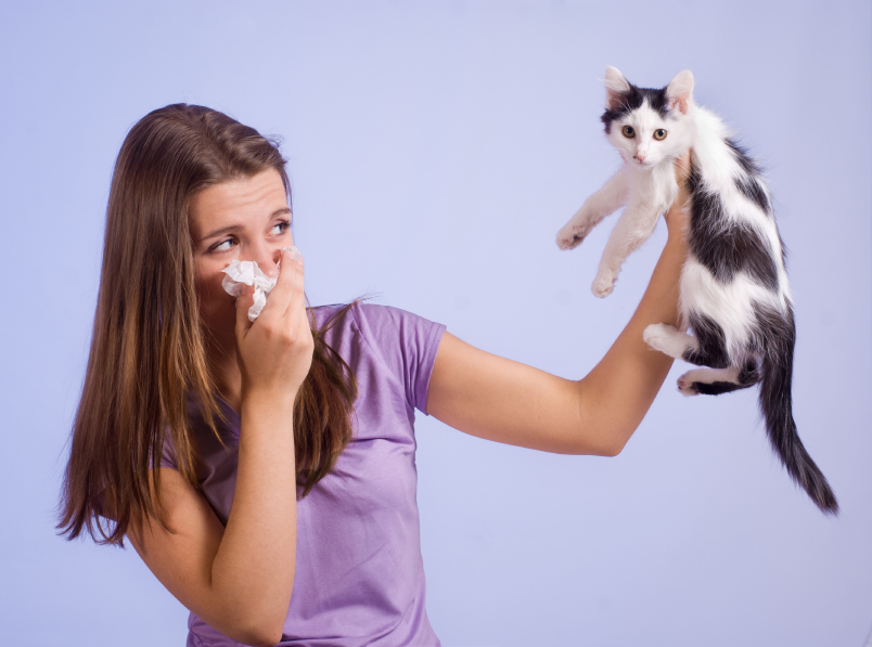 What are pet allergens?